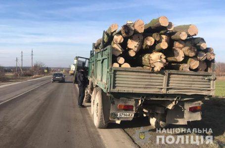 На Тернопільщині виявили порушників, які незаконно вирубували ліс
